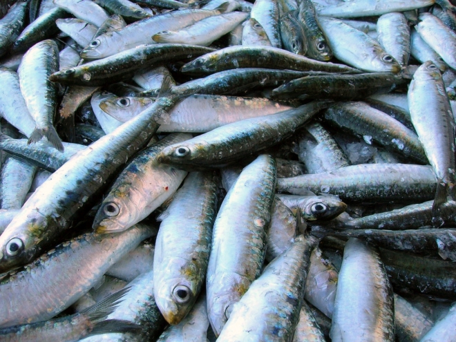 Sardinas, fuente de omega 3